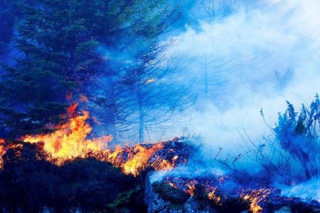 Павел Анисимов - Анализ экологических проблем Норвегии